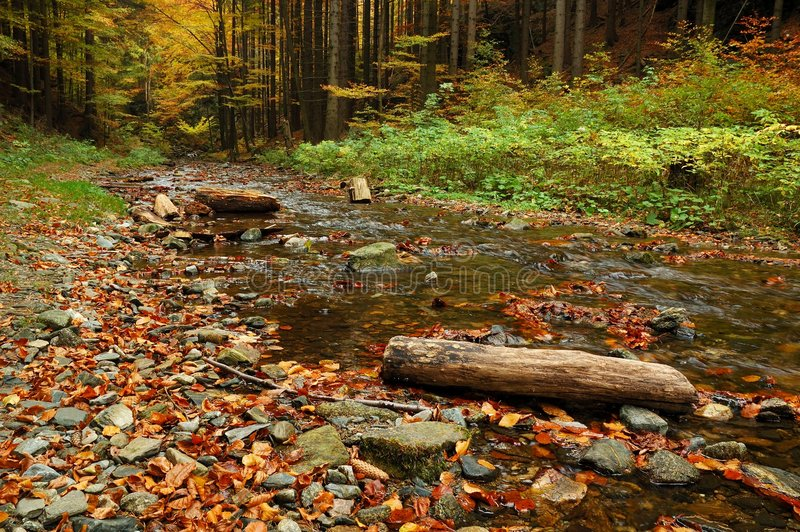 Download Autumn forest stock image. Image of fall, cascade, creek - 6998463