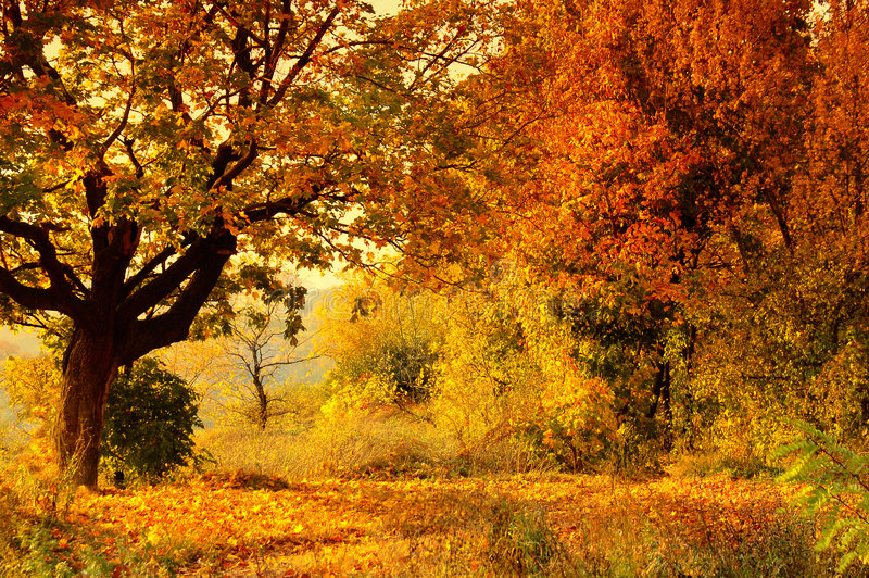 Autumn forest. Photo of the autumn landscape royalty free stock images