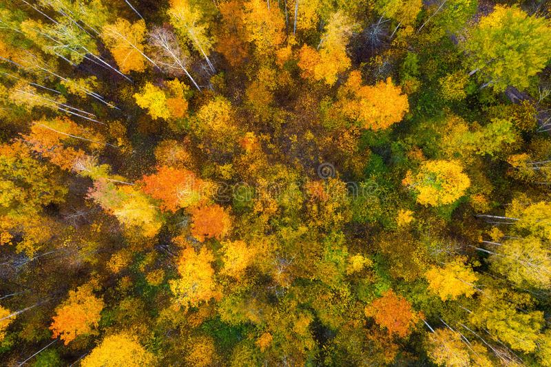 Autumn forest from above. Colorful forest aerial view. Fall nature. Scenic yellow trees in woodland. Top view on beautiful colored stock photos
