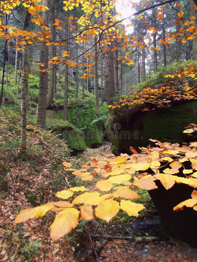 Autumn forest, Adrspach rock royalty free stock images