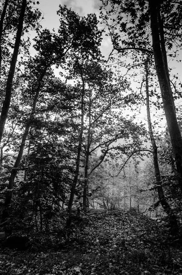 Autumn Forest Of Aegean Region imagens de stock royalty free