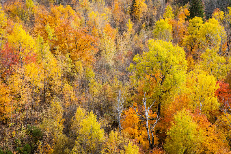 Autumn forest. Aerial view of a colourful autumn mixed forest. The picture was taken in the Laurentians (Canada royalty free stock images