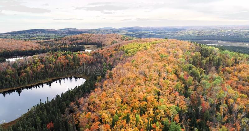 Autumn forest aerial view. Large autumn forest, lake, view from the sky royalty free stock photo