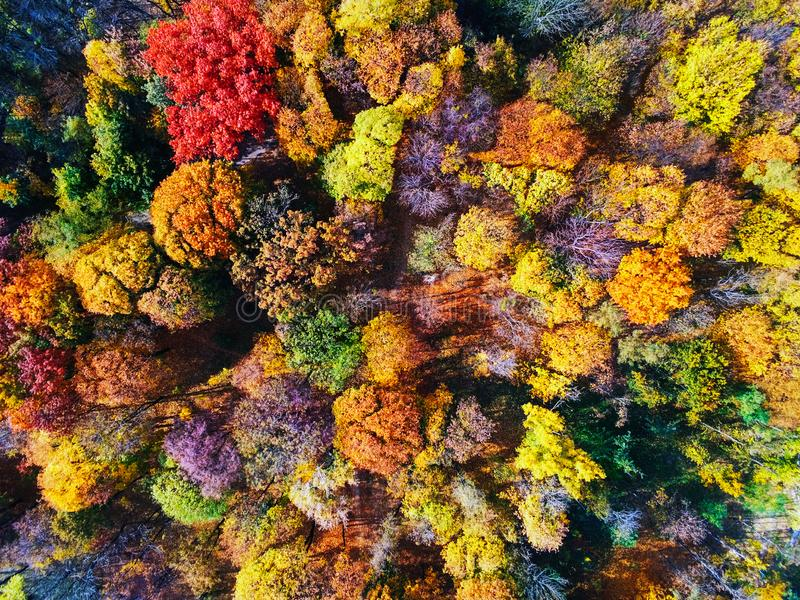 Autumn forest aerial view. Multicolored fall trees in city park. Beautiful colorful seasonal foliage. Autumnal vibrant riot of stock photography