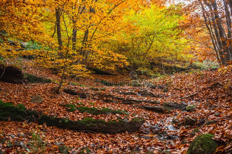 Autumn forest 22 stock photography