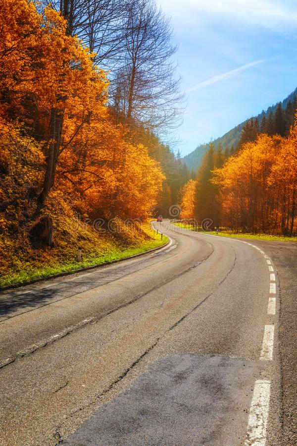 Autumn forest. Beautiful forest with country road at sunset. Colorful landscape with trees, rural road, orange and red leaves, sun stock photography