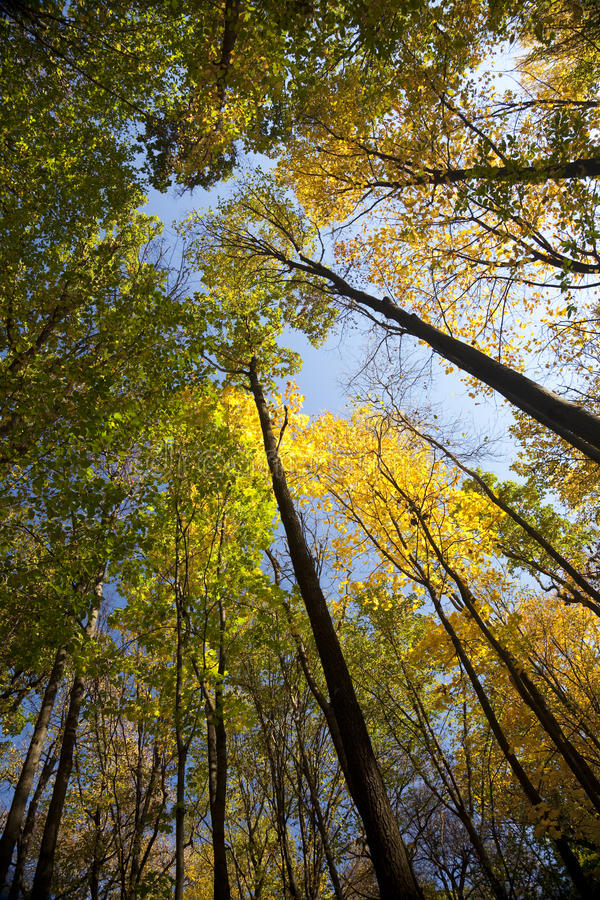 Download Autumn Forest / Bright Colors Of Leaves / Sunlight Stock Image - Image: 11431427