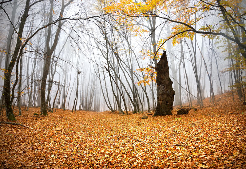 Autumn in a forest royalty free stock images