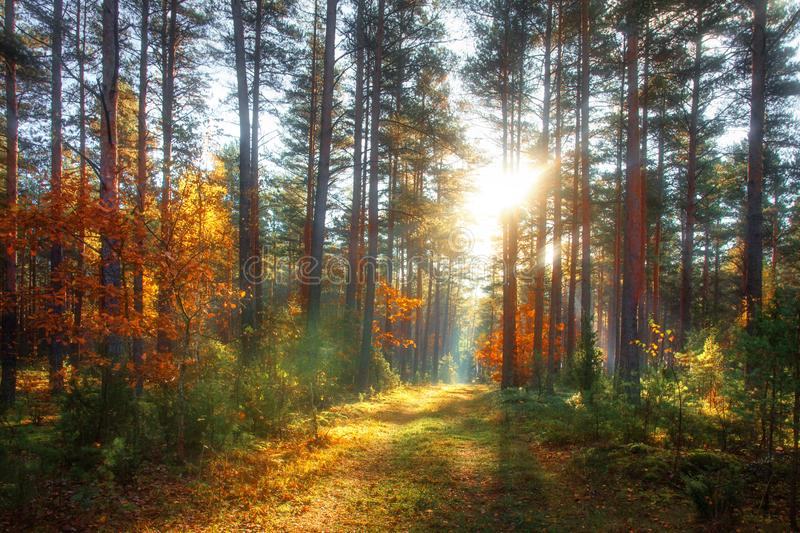 Autumn forest. Colorful nature landscape in sunny october day royalty free stock image
