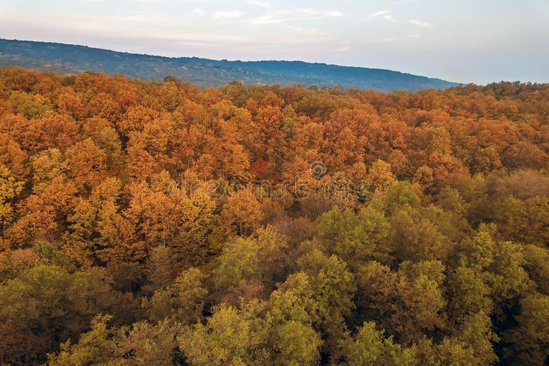 Autumn forest colorful trees and leafs aerial view royalty free stock photos