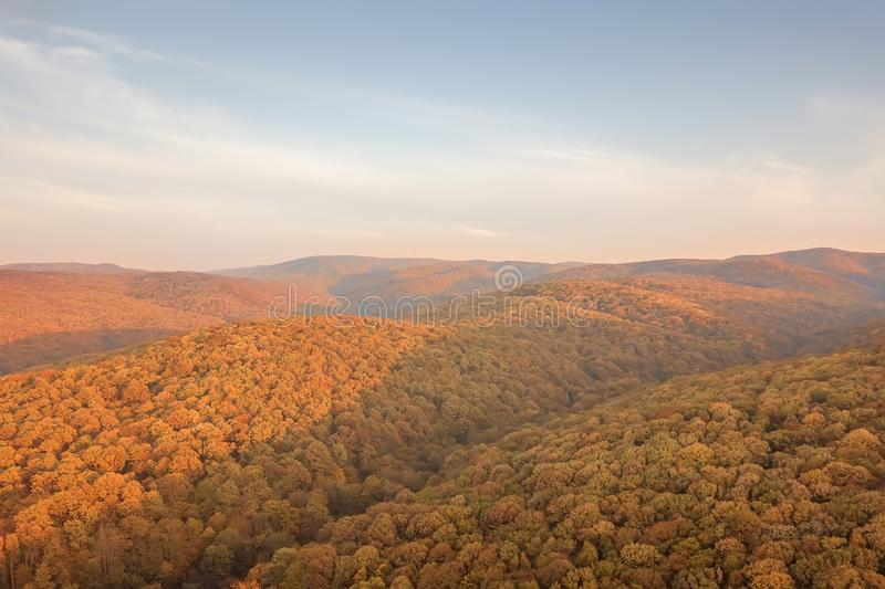 Autumn forest colorful trees and leafs aerial view. Forest Aerial stock image