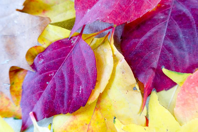 Autumn and forest, colorful trees and leaves stock photo