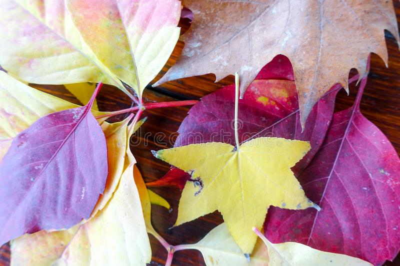 Autumn and forest, colorful trees and leaves stock image