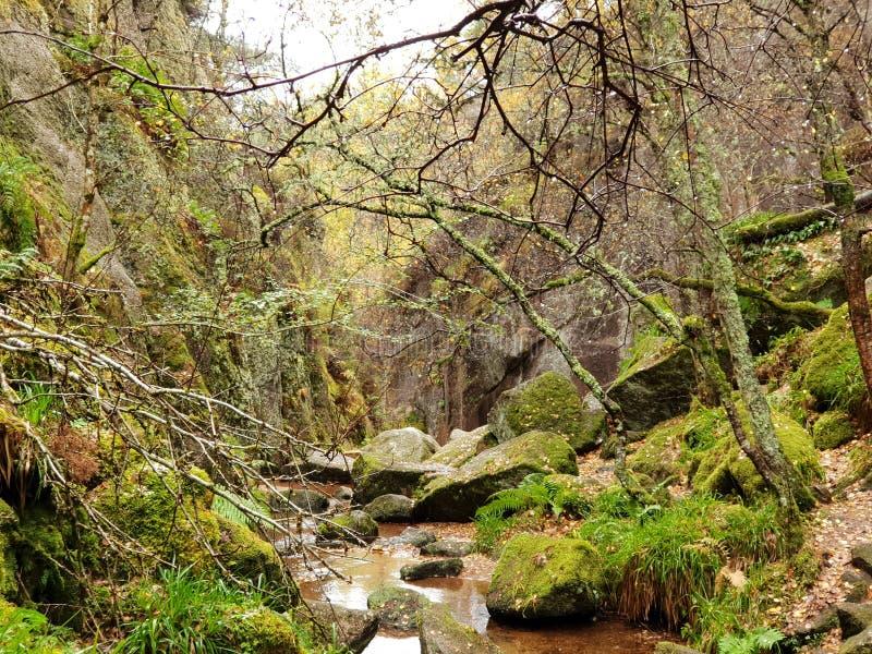 Autumn Forest con el río y la piedra imagen de archivo