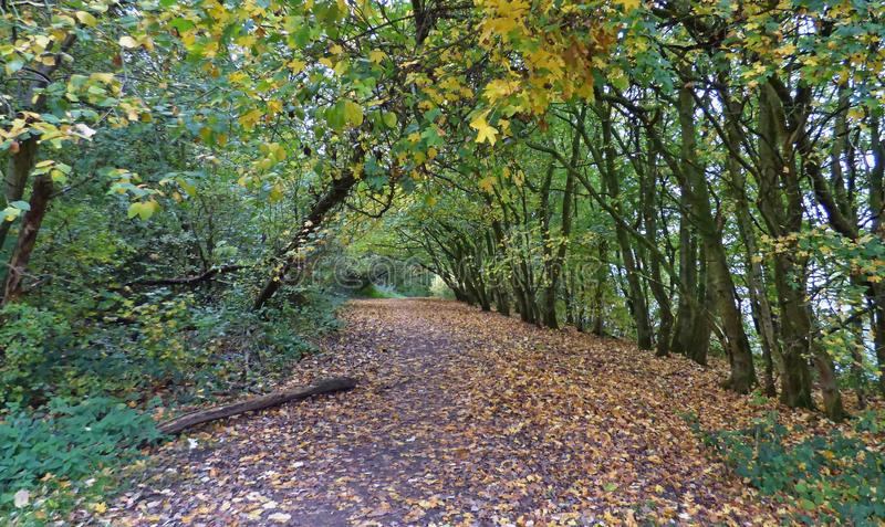 Autumn forest country park - walk in the United Kingdom stock photo