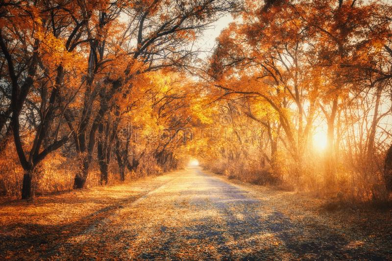 Autumn forest with country road at sunset. Trees in fall. Autumn forest with country road at sunset. Colorful landscape with trees, rural road, orange and red stock photos