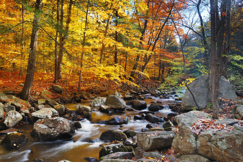 Autumn Forest Creek Royalty Free Stock Images