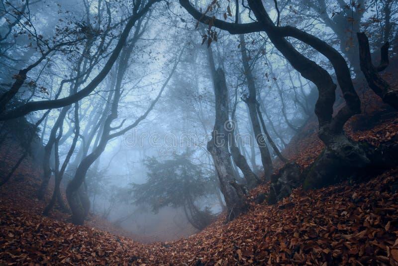 Autumn forest. In the Crimea (Ai-Petry stock photo