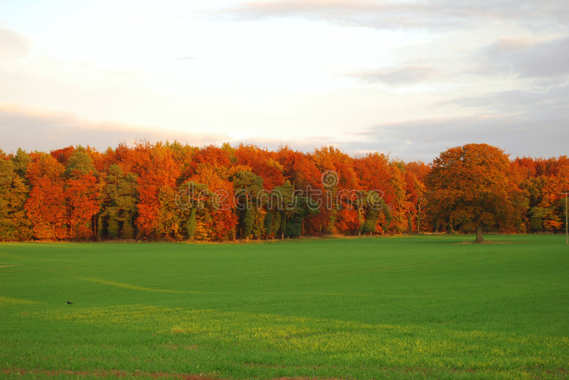 Download Autumn forest edge stock image. Image of orange, country - 4122921