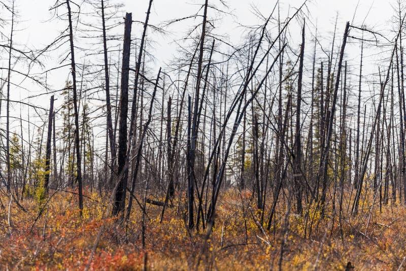 Autumn Forest In en Sunny Day i Ryssland fotografering för bildbyråer