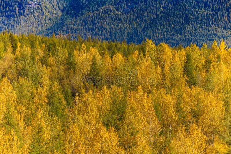 Autumn Forest In en Sunny Day i Ryssland arkivfoto