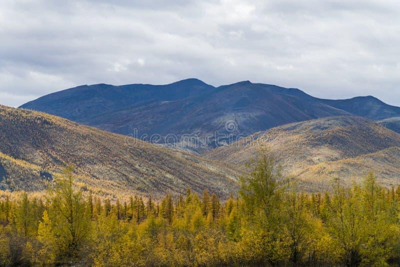 Autumn Forest In en Sunny Day i Ryssland royaltyfri bild