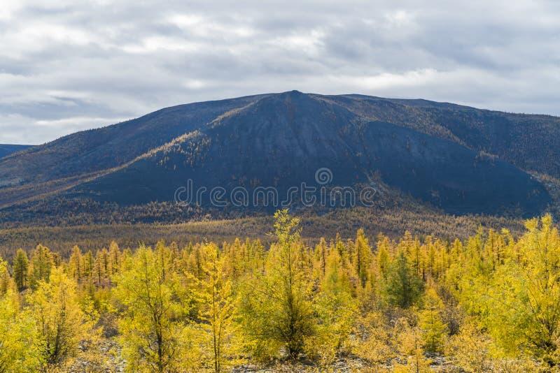 Autumn Forest In en Sunny Day i Ryssland arkivfoton
