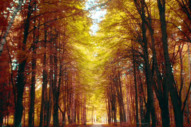 Autumn forest fairy-tale alley royalty free stock image