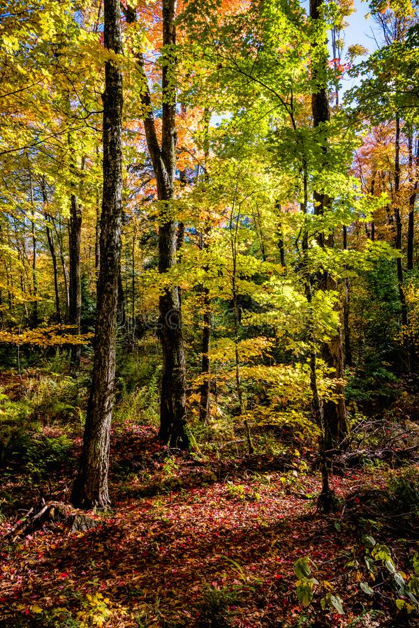 Forest scene with lush autumn colors royalty free stock images