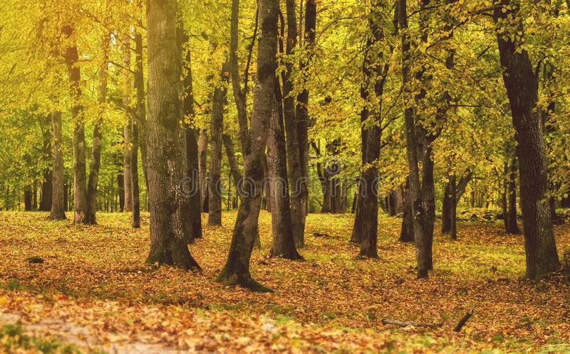 Autumn forest. Colorful foliage. Fall days. stock images