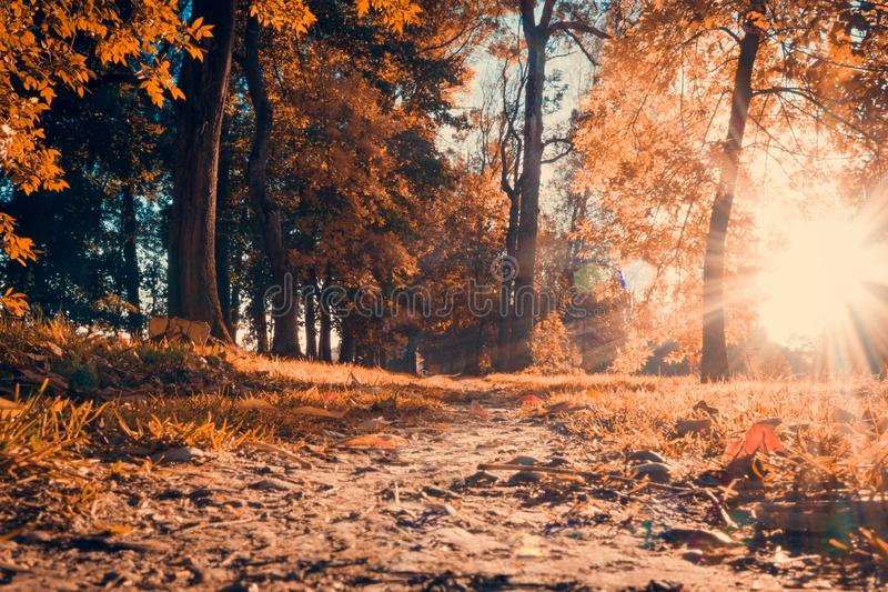 Fall. Autumn landscape. Autumn forest. Path in autumn park in evening. stock photos