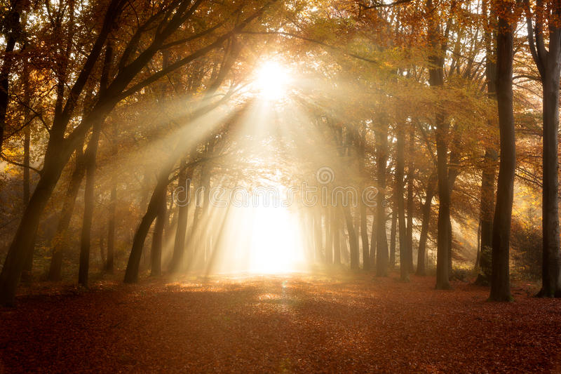 Autumn forest with fallen leaves and sunlight. Sun shining through a forest on a path covered with fallen leaves during Autumn stock photography
