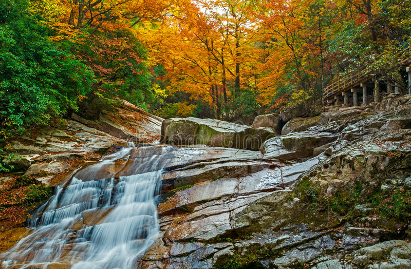 The autumn forest falls stock image