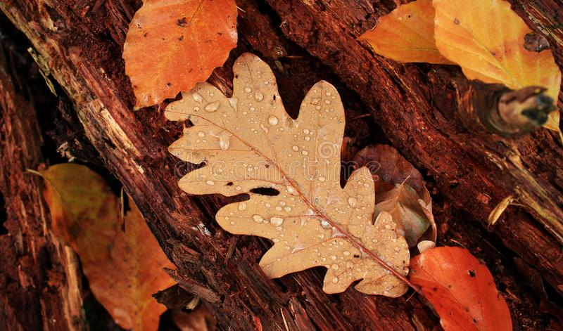 Autumn forest floor with leaves. royalty free stock photos