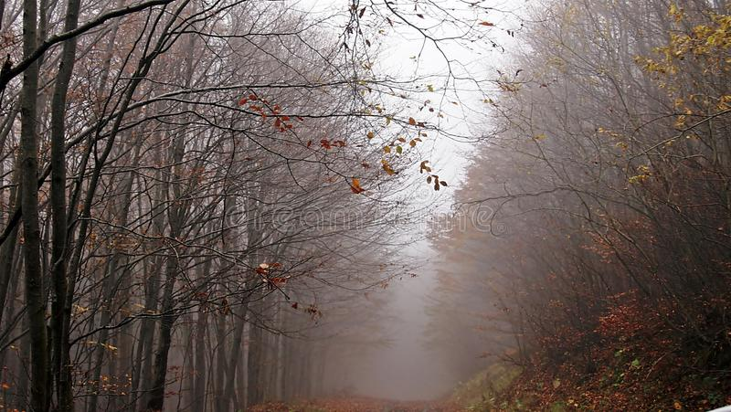 Autumn, forest, fog, amazing. Delicate looking trees, spider webs covered in dew and absolute silence. Autumn is the best romantic time to visit! nForest, fog royalty free stock photo
