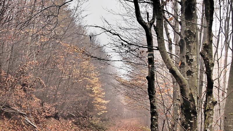Autumn, forest, fog, amazing. Delicate looking trees, spider webs covered in dew and absolute silence. Autumn is the best romantic time to visit! nForest, fog stock image