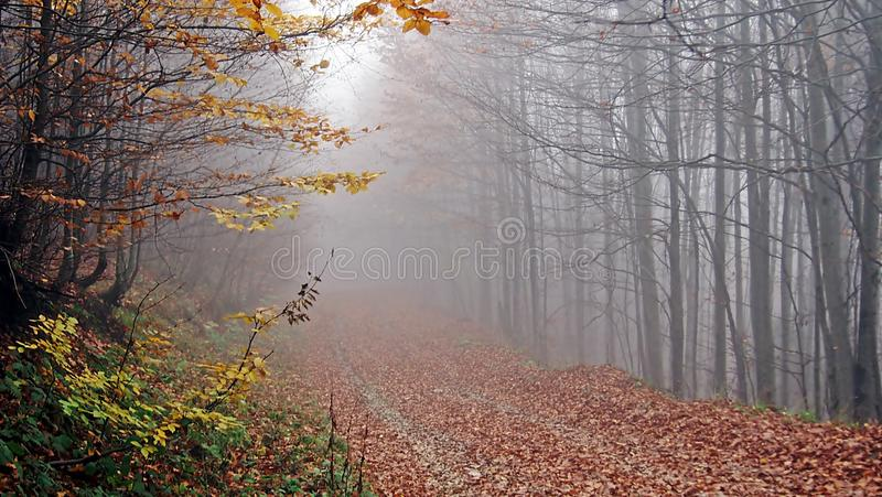 Autumn, forest, fog, amazing. Delicate looking trees, spider webs covered in dew and absolute silence. Autumn is the best romantic time to visit! nForest, fog royalty free stock photography