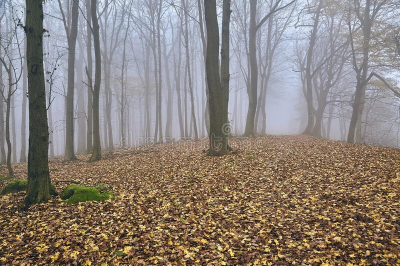 Autumn Forest Fog stock image