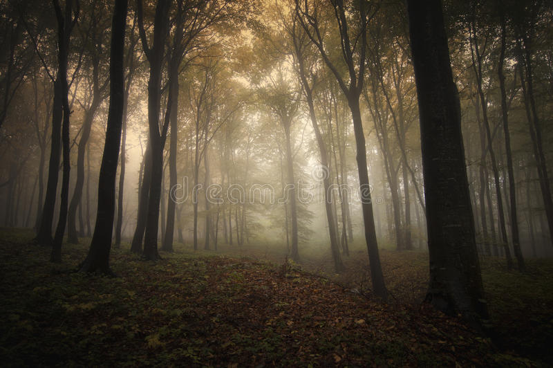 Download Autumn In Forest With Fog And Light Stock Image - Image: 41502027