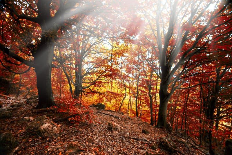 Autumn forest fog sun leaf royalty free stock image