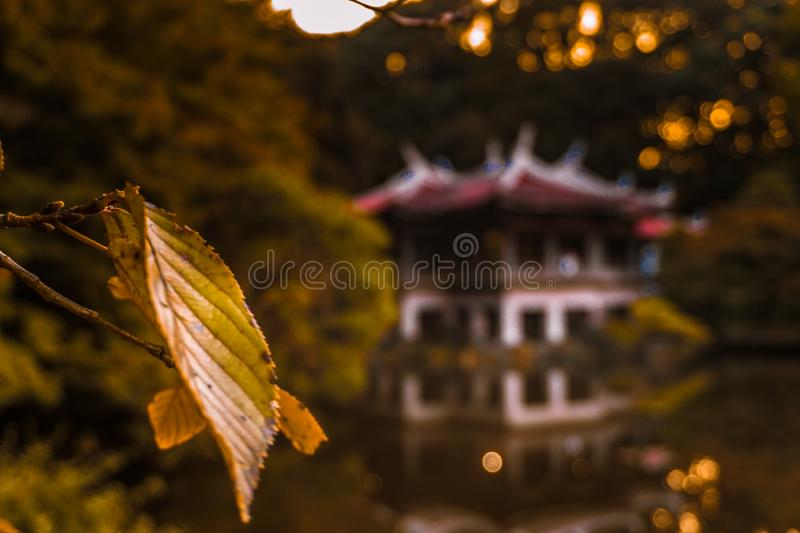 Autumn forest with a leaf in focus and an ancient building in the background. Autumn forest full of red and yellow leaves with sun rays coming down over a pond royalty free stock photos