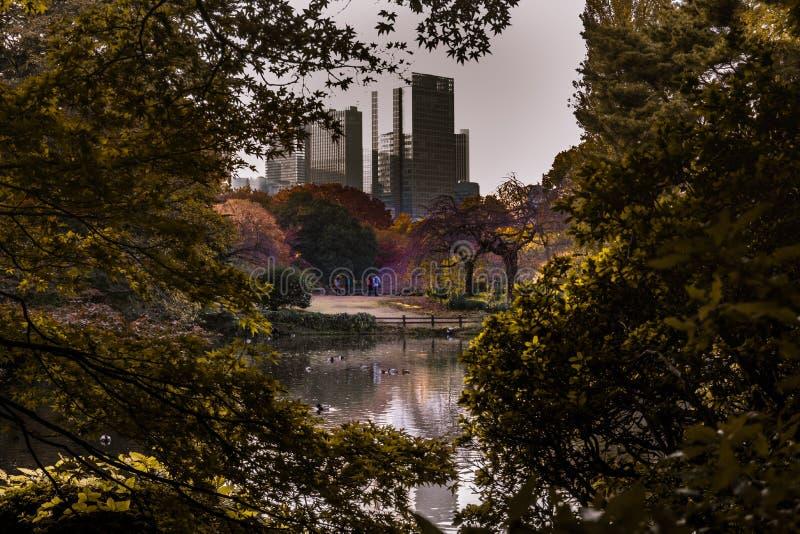 Autumn in the city of Tokyo in Shinjuku stock photo