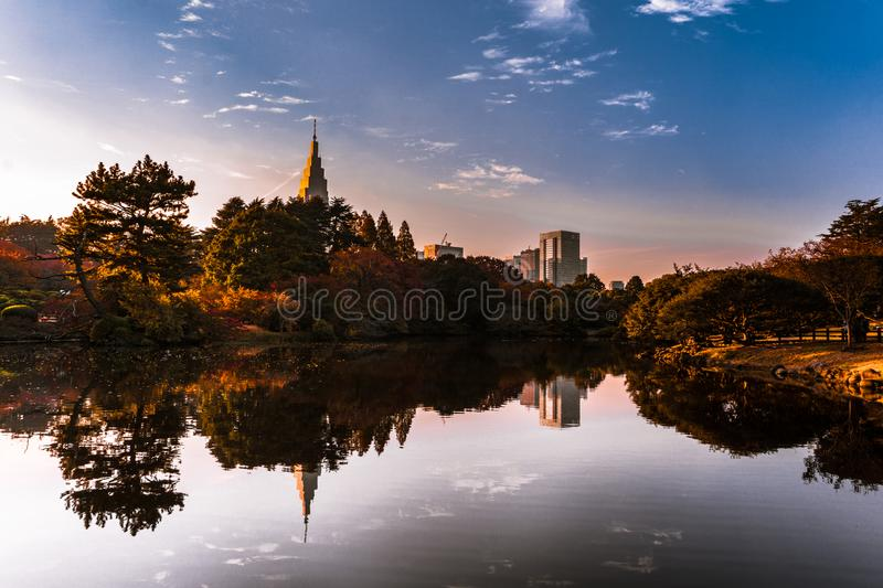 Autumn forest in the city of Tokyo with skyscrapers royalty free stock image