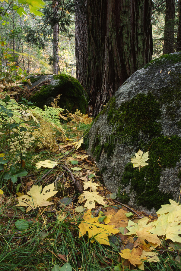 Free Autumn Forest In Yosemite Stock Images - 3765834