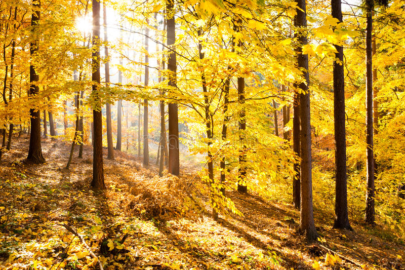 Autumn forest inspirational landscape, fall scenery. royalty free stock image