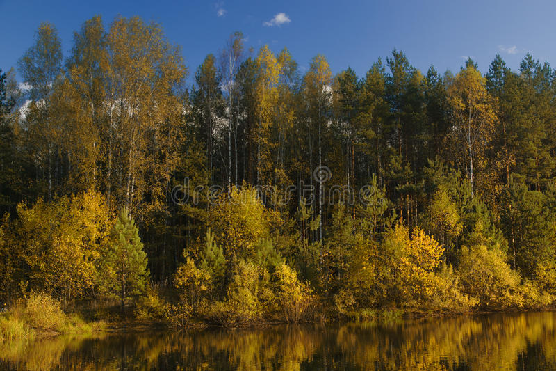 Autumn forest lake royalty free stock photos