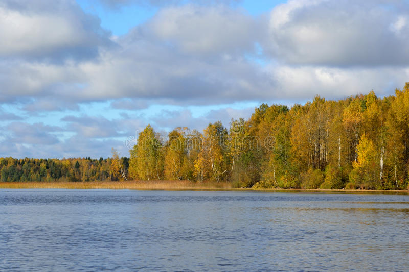 Autumn forest on the lake at morning. stock image