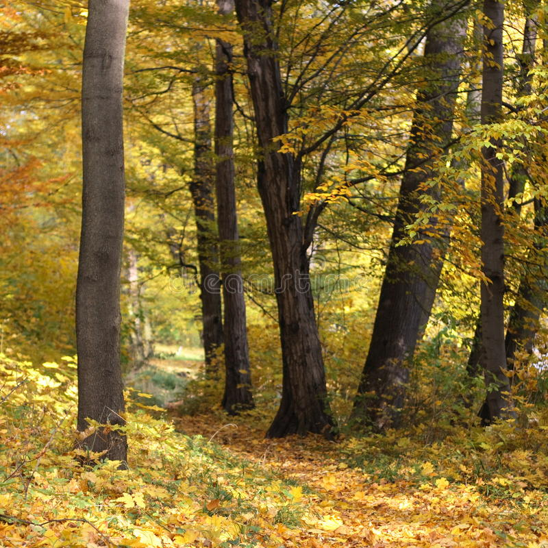 Free Autumn Forest Landscape Stock Image - 16728181