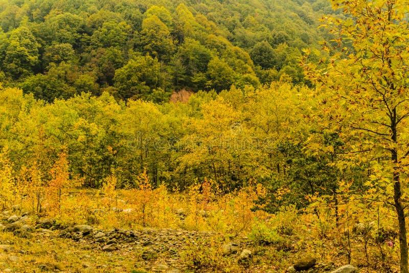 Autumn Forest Landscape Background imagem de stock royalty free