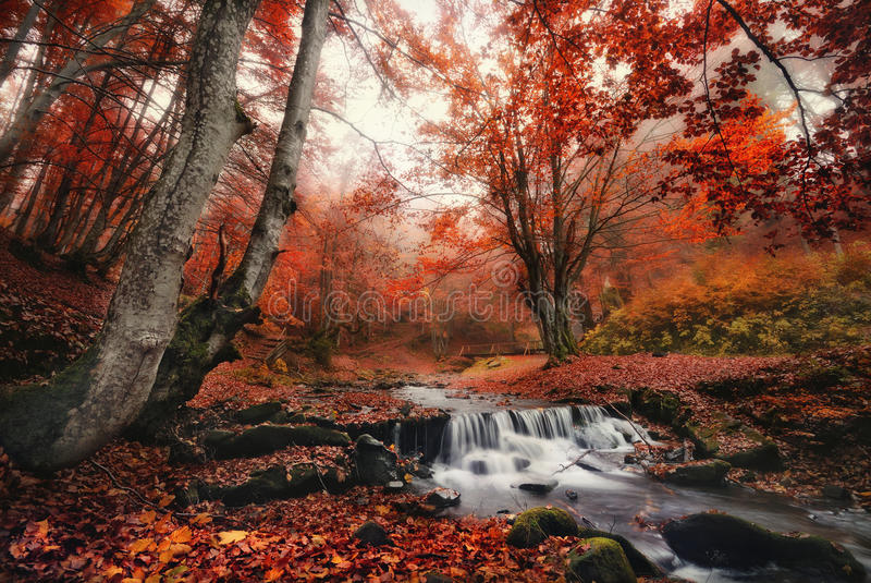 Autumn Forest Landscape With Beautiful Creek And Small Bridge.Enchanted Autumn Foggy Beech Forest With Red Leaves And Cold Creek. Enchanted Autumn Foggy Beech stock photo